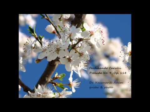 Фердинандо Карулли - Opus 114 No 9 Prelude