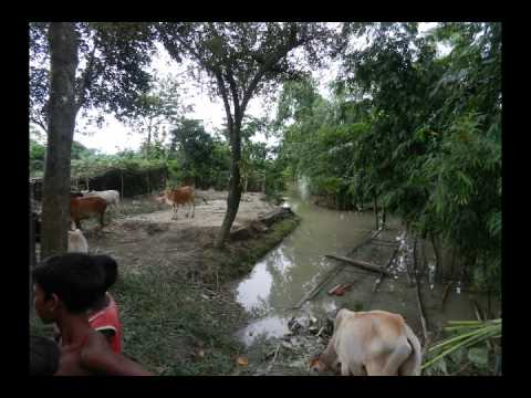 M.BADRUDDIN AJMAL (MP) DHUBRI ASSAM FLOOD VISITED JUNE 2012