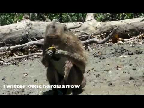Thai Swimming Monkeys