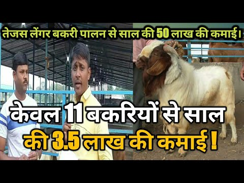 केवल 11 बकरियों से 3.5 लाख की कमाई !। goat farming information in hindi