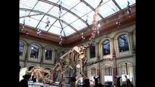 Vorschaubild Hörspiel Im Museum: Echo...