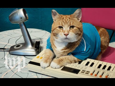 A look back at the life of Bento, the Keyboard Cat
