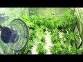 Great News For Medical Marijuana Growers