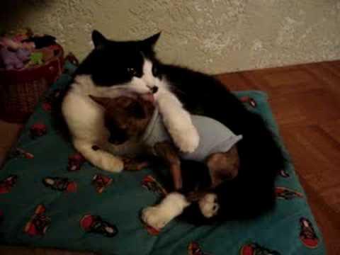 kitty has diarrhea