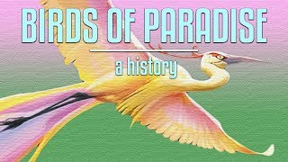 The Curious Case of Birds of Paradise