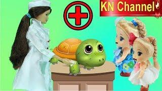 Đồ chơi trẻ em BÚP BÊ KN Channel CƯỠI CÁ MẬP TRẮNG | BÁC SĨ BARBIE CHỮA TRỊ RÙA CON