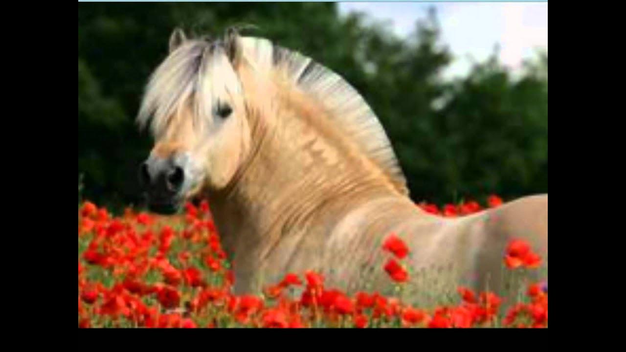 Мягкая музыкальная игрушка Лошадь в шляпе с цветком в зубах 59