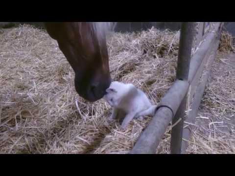 仲良しな馬と猫さんに癒さ...
