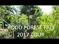 Full Fall Food Forest Tour in Phoenix Area 9B