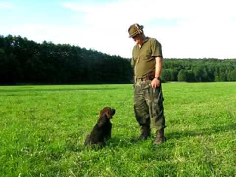 Dog Training - Bark On Command. / Szkolenie Psa - Daj Głos.