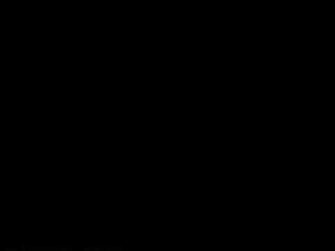 Caballos se vuelven locos en el hipodromo