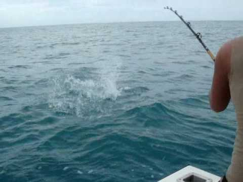 Shark catch deep sea fishing