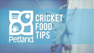 Cricket Food Pet Tip with Phil