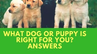 What Dog or Puppy Is Right For You? Answers