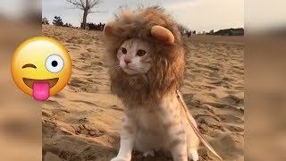 Funny Animals Compilation - Cutest Animals Ever