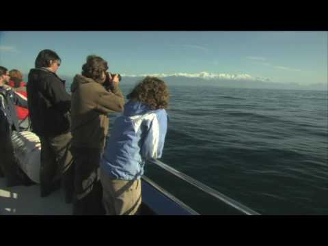 Whale Watch Kaikoura, Responsible Tourism Awards winner