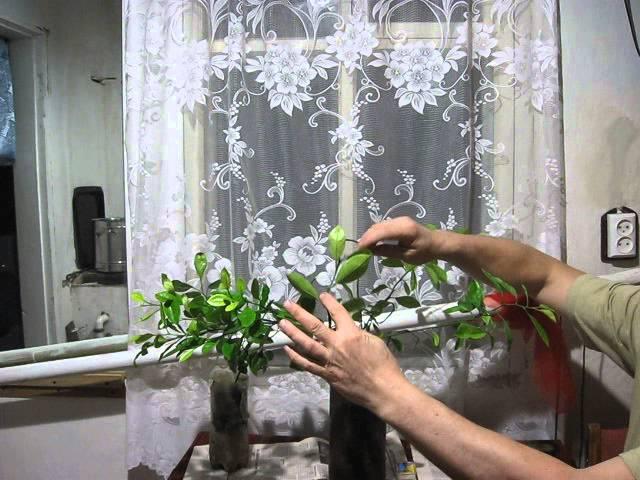 140Как обрезать лимоны в домашних условиях