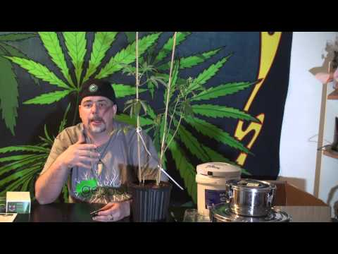 Genetic Stabilization of Cannabis, Stress testing,...