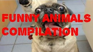 Funny animals video compilation
