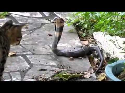 Cat Vs Dog Fight Video