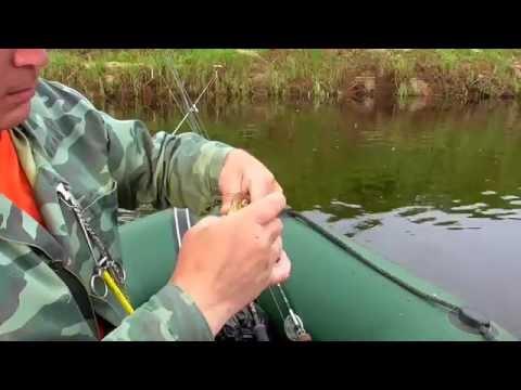 лов плотвы в проводку с лодки