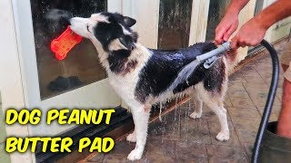 Dog Peanut Butter Pad