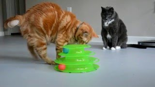 New Cat Toy - Ball Tower