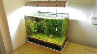 2 Months Update - NO filter, NO CO2, NO Ferts 5 Gallon Nano Tank (Surprise Hitchhiker) Time Lapse