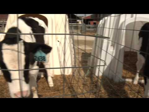 Close-up on Farm Animal Welfare Part 1