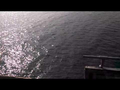 Ventura pier fishing- omar hooks a great white shark
