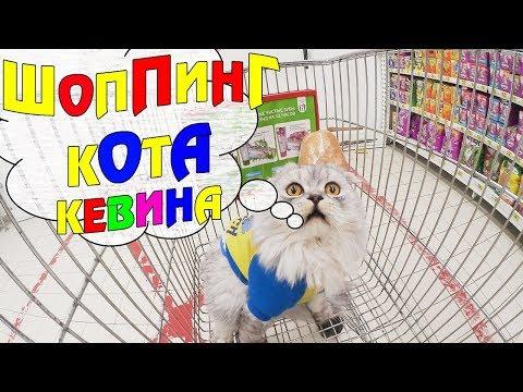 С котом вход разрешён! КЕВИН В ОГРОМНОМ МАГАЗИНЕ ДЕЛАЕТ ПОКУПКИ