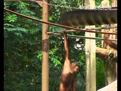 Singapore Zoo - TVC by Asiatravel.com