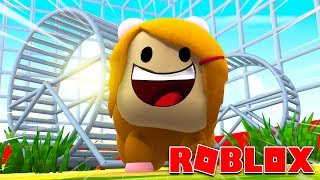 Roblox Roleplay Molly Turns Into A Hamster!
