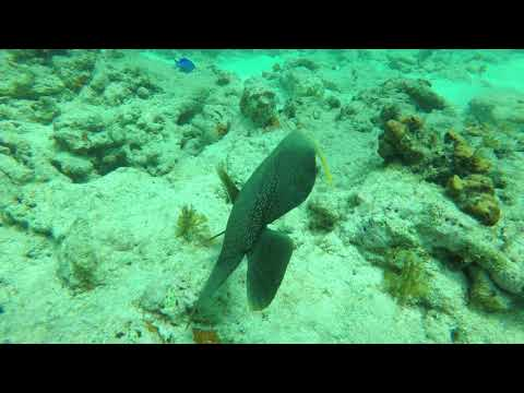 Is this an ancient skull or head statue found underwater in Florida Keys? thumbnail