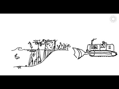 Ecosystem Services video