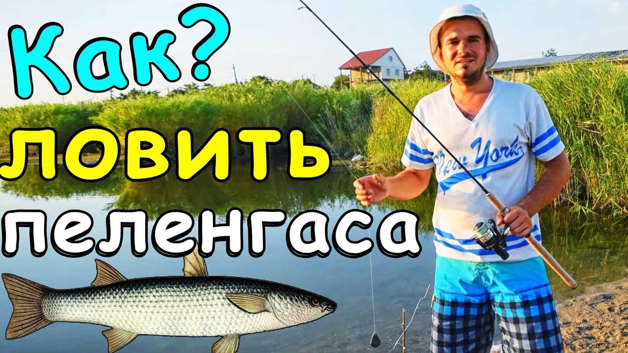 видео как ловить пеленгаса