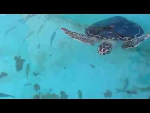 すいすい泳いでます! (投稿者 : うみ さん)