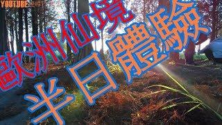 [老王TV] 在台南的歐洲仙境 景點落羽松林