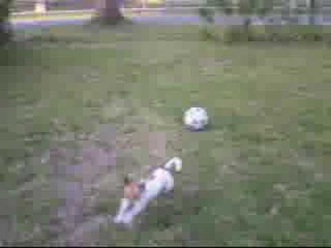 Ms Deja - Soccer and Tether Ball Dog Video