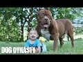 Giant Pit Bull Hulk & The Newborn Baby