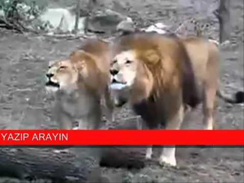 allah hoo zikar by animals