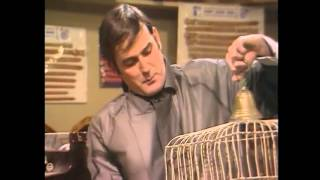 Watch Monty Python The Dead Parrot video
