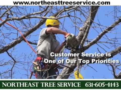Northeast Tree Service, Blue Point, NY