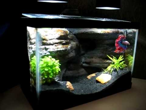 DIY aquarium background with Stunning Crown Tail Betta - 2.5 gallon ...