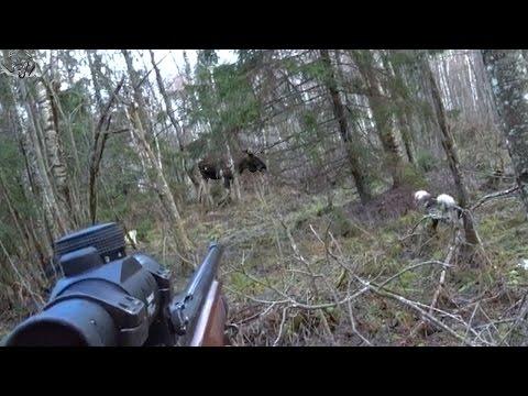 #4 Необычные случаи на охоте!
