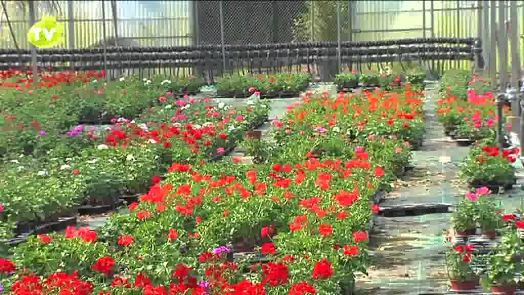 endanea viveros de producci n youtube On produccion de plantas en vivero pdf