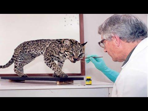 Clique e veja o vídeo Curso Taxidermia - Empalhamento de Aves e Mamíferos