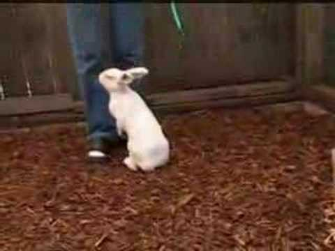 Rabbit Agility
