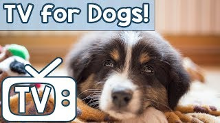 TV for Anxious and Depressed Dogs! Soothe Your Anxious Dog with this Gorgeous TV with Nature Sounds!