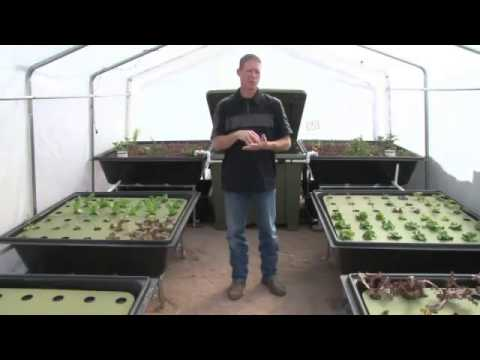 Aquaponics System Kits for Your Backyard